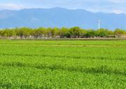 Intermediate (Agro-Chemicals)