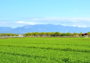 農薬原料(ファインケミカルプロダクト)